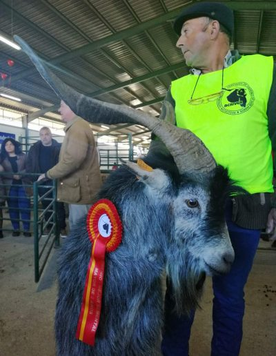 Resultados del VI Concurso Morfológico de Cabra Verata en la Feria Agroganadera Trujillo 2019